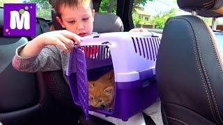 Кошечка Мурка ведём котёнка к ветеринару в клинику для животных