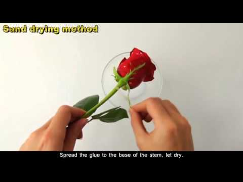 How to Dry Roses