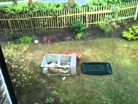 Fox trying to get rabbit & guinea pigs