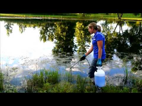 Algae Control Application