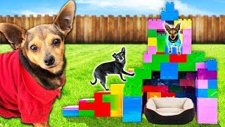 Building Our Dogs a Giant Pet Hotel Only Using Legos! PawZam Dogs