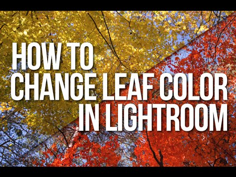 Quick Tip: Change the Color of Leaves in Lightroom