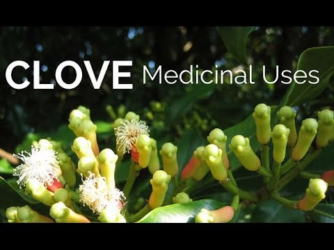 Health Benefits of Cloves: The Super Spice for Healing - Clove and Clove Oil Medicinal Uses