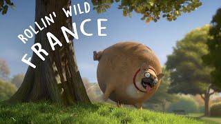 rollin france what if animals were round