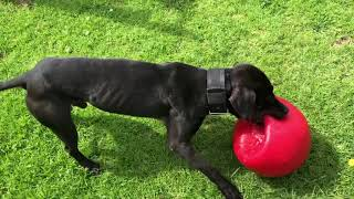 ch jeep dogs Videos - 9tube tv