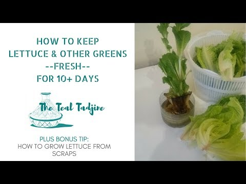 How to Keep Lettuce Fresh for 10+ Days PLUS Bonus Tip!