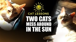 Two Cats Mess Around in the Sun