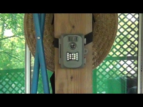 Trail Camera Used As a Security Camera