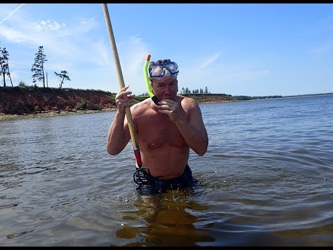 Tranquility Tours Giant Bar Clam Dig PEI Tours
