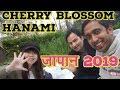 CHERRY BLOSSOM HANAMI JAPAN 2019 II साकुरा जापान II Indian In Japan II Rom Rom ji