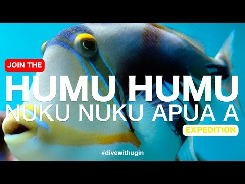 Scuba diving documentary - The mighty Humu - episode 1
