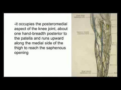 Lower limb blood vasal