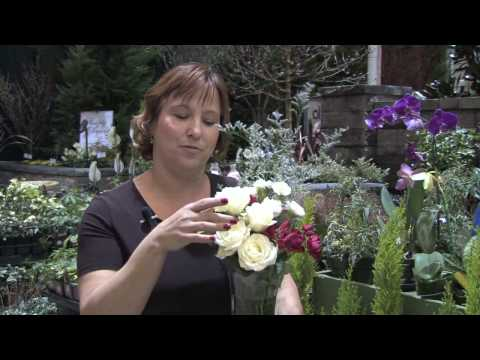 How to Grow Plants & Flowers : How to Make Blue Roses