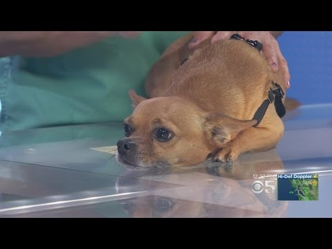 Pet Expert: Advice On Treating 'Kennel Cough'
