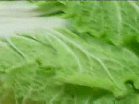 Cooking Tips : How to Pick Napa Cabbage