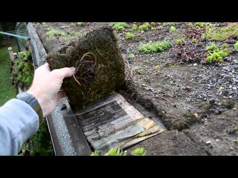 DIY Sedum shed roof