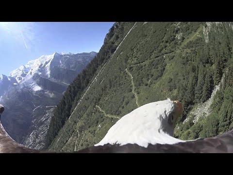 Bald Eagle POV flight - Chamonix, Mont Blanc