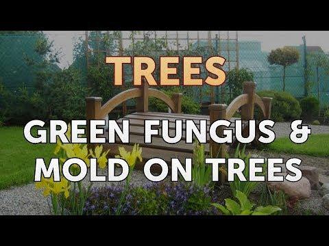 Green Fungus & Mold on Trees
