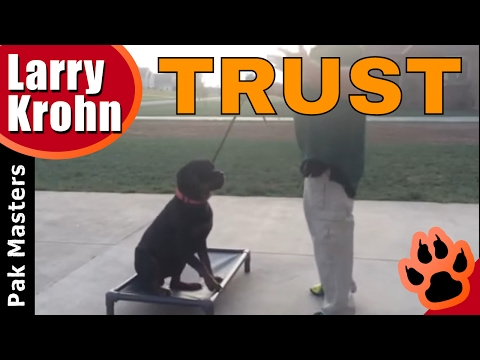 How to build confidence and trust with ANY DOG 🔹 Rottweiler Training