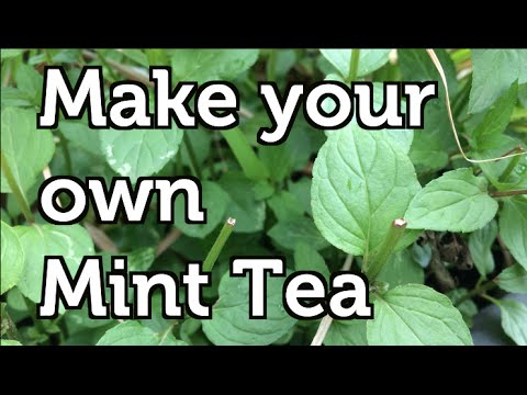 How to Make your own Organic Mint Tea