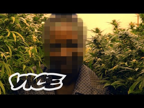 How Weed Laws Are Failing the UK: High Society