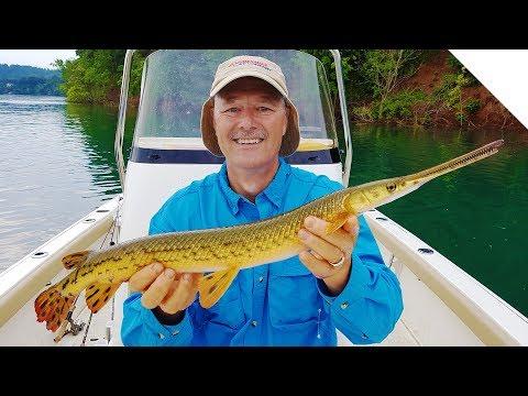 Gar Fishing - Catching Longnose Gar