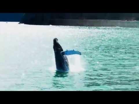 Whale watching Seward Alaska