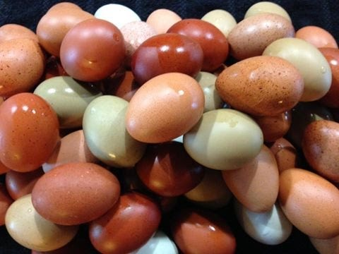 COOKED EGGS FREEZE DRIED Harvest Right Freeze Dryer MEAL HIKING CAMPING BREAKFAST  HEALTHY HOW TO