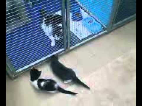 Kittens Playing Jumping on top of each other FUNNY VIRAL Cats