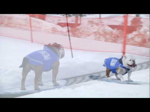 When Dogs Snowboard
