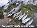 Download Тест новых спинингов и такая рыбацкая удача MP3,3GP,MP4