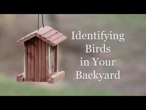 Identifying Birds in Your Backyard