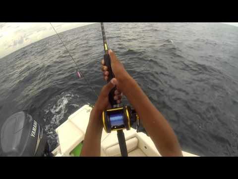Fishing for Sailfish and Blackfin Tuna