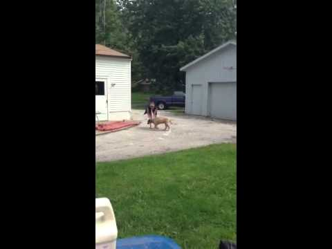 Neighbors dog in my yard