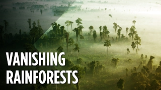 What Will The World Look Like When The Rainforests Disappear?