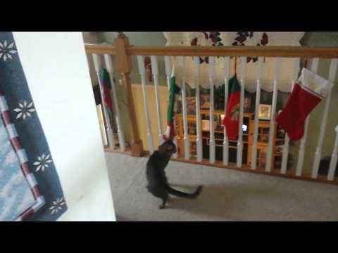 Cat Attacks Christmas Stocking
