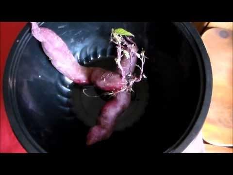 How To Grow Sweet Potato Slips - The Easy Way