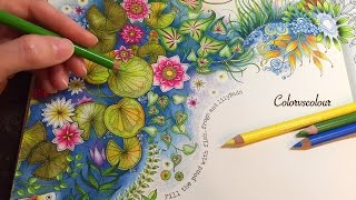 Secret Garden Artists Edition By Johanna Basford Adult Coloring
