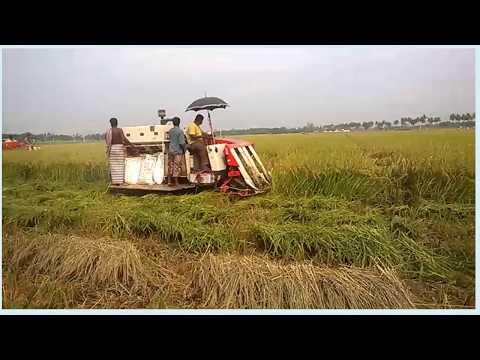 Paddy cutter Machine/Rice cutter machine