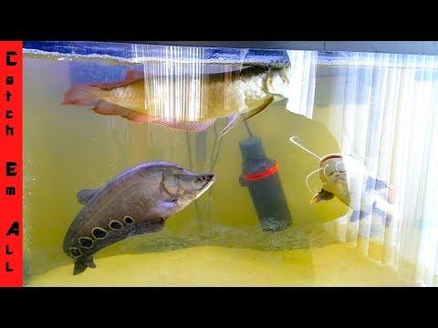 DUAL AQUARIUM Flowerhorn Catfish BUILDING NEW FISH TANKS