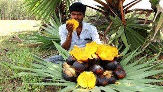 Farm Fresh PALM FRUIT Cutting and Eating In My Village | sugar palm fruit | village food taste