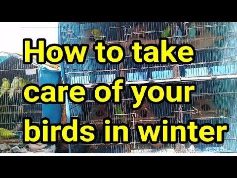 How to take care of birds in winter breeding season
