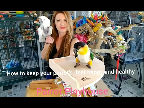 How to keep your parrot's feet happy and healthy