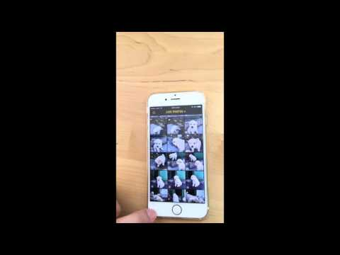 Live Photo to GIF or Video (ImgPlay for iOS)