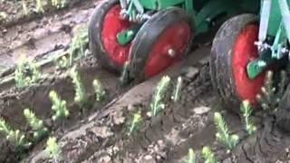 """""""АК"""": выращивание елей в питомнике Rmk"""