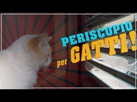 Periscopio per gatti  - Fai da Te
