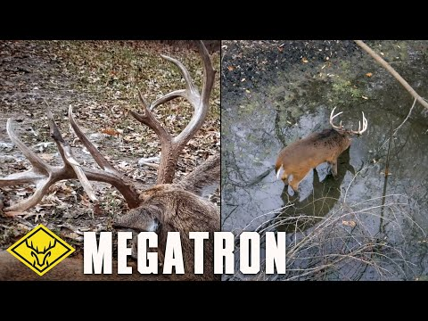 The Hunt for MEGATRON - A tale of two bucks...