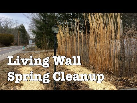 Living Wall - Spring Renovation and Cleanup