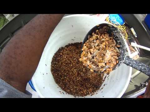 Bream Bait 101, Bluegill Bait101, Shell Cracker Bait 101