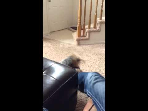 Dog Bites Foot